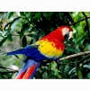 Nature Parrot Wallpapers