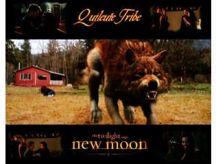 New Moon Quileutes Wallpaper