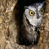 Download owl 8 hd wallpapers, owl 8 hd wallpapers Free Wallpaper download for Desktop, PC, Laptop. owl 8 hd wallpapers HD Wallpapers, High Definition Quality Wallpapers of owl 8 hd wallpapers.