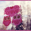 Download owl love you forever cover, owl love you forever cover  Wallpaper download for Desktop, PC, Laptop. owl love you forever cover HD Wallpapers, High Definition Quality Wallpapers of owl love you forever cover.