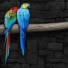 Download pair of parrots wallpapers, pair of parrots wallpapers Free Wallpaper download for Desktop, PC, Laptop. pair of parrots wallpapers HD Wallpapers, High Definition Quality Wallpapers of pair of parrots wallpapers.