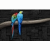 Pair Of Parrots Wallpapers