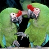 Download parrot 0 hd wallpapers, parrot 0 hd wallpapers Free Wallpaper download for Desktop, PC, Laptop. parrot 0 hd wallpapers HD Wallpapers, High Definition Quality Wallpapers of parrot 0 hd wallpapers.