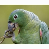 Parrot 00 Hd Wallpapers