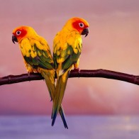 Parrot 22 Hd Wallpapers