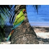 Parrot 3 Hd Wallpapers