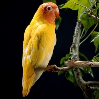 Parrot 33 Hd Wallpapers
