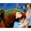 Parrot 337 Hd Wallpapers