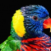 Parrot 4 Hd Wallpapers