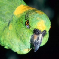Parrot 44 Hd Wallpapers