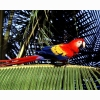 Parrot 5 Hd Wallpapers
