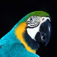 Parrot 6 Hd Wallpapers