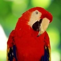 Parrot 7 Hd Wallpapers