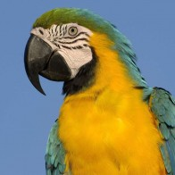 Parrot 8 Hd Wallpapers