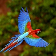 Parrot 83 Hd Wallpapers