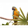 Parrot 88 Hd Wallpapers