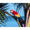 Parrot 9 Hd Wallpapers