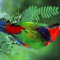 Parrot 96 Hd Wallpapers