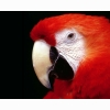 Parrot 99 Hd Wallpapers