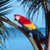 Download parrot beach wallpapers, parrot beach wallpapers Free Wallpaper download for Desktop, PC, Laptop. parrot beach wallpapers HD Wallpapers, High Definition Quality Wallpapers of parrot beach wallpapers.