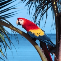 Parrot Beach Wallpapers