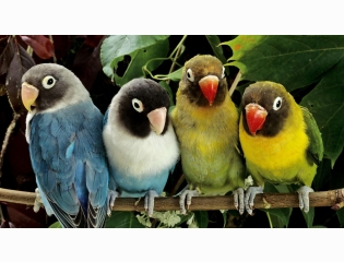 Parrot Hd Wallpapers New 7