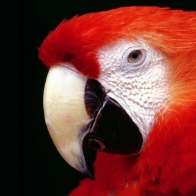Parrot High Resolution Wallpapers