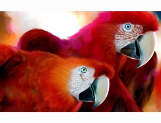 Parrots Widescreen Wallpapers