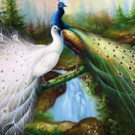 Peacock Art Design 14 Hd Wallpapers