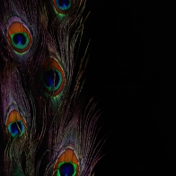 Peacock Art Design 37 Hd Wallpapers