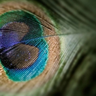 Peacock Art Design 6 Hd Wallpapers