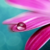 Download perfect drop, perfect drop  Wallpaper download for Desktop, PC, Laptop. perfect drop HD Wallpapers, High Definition Quality Wallpapers of perfect drop.