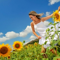 Photoshoot In Sunflower Field Wallpaper