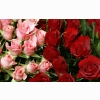 Pink Amp Red Roses Bouquet