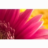 Pink Flower Widescreen
