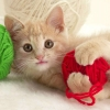 Download playful kitten wallpapers, playful kitten wallpapers Free Wallpaper download for Desktop, PC, Laptop. playful kitten wallpapers HD Wallpapers, High Definition Quality Wallpapers of playful kitten wallpapers.