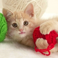 Playful Kitten Wallpapers