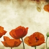 Download Poppies Flowers Vinatge wallpaper HD & Widescreen Games Wallpaper from the above resolutions. Free High Resolution Desktop Wallpapers for Widescreen, Fullscreen, High Definition, Dual Monitors, Mobile