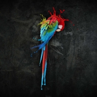 Pretty Parrot Splash Wallpapers