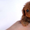 Download puppy dog cover, puppy dog cover  Wallpaper download for Desktop, PC, Laptop. puppy dog cover HD Wallpapers, High Definition Quality Wallpapers of puppy dog cover.