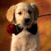 Download puppy love wallpapers, puppy love wallpapers Free Wallpaper download for Desktop, PC, Laptop. puppy love wallpapers HD Wallpapers, High Definition Quality Wallpapers of puppy love wallpapers.