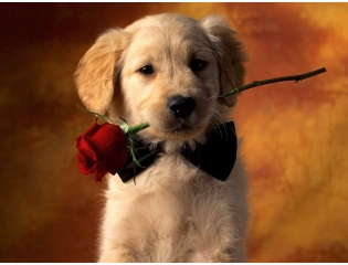 Puppy Love Wallpapers