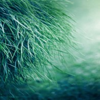 Pure Grass Wallpapers