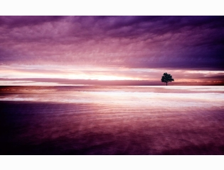 Purple Nature Wallpapers