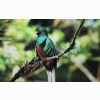 Quetzal Bird Hd Wallpapers
