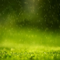Rain Drops Wallpapers