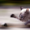 Download rat vs cat wallpapers, rat vs cat wallpapers  Wallpaper download for Desktop, PC, Laptop. rat vs cat wallpapers HD Wallpapers, High Definition Quality Wallpapers of rat vs cat wallpapers.