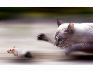 Rat Vs Cat Wallpapers