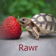 Rawr Turtle Cover