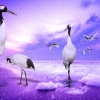 Download red crowned cranes japan wallpapers, red crowned cranes japan wallpapers Free Wallpaper download for Desktop, PC, Laptop. red crowned cranes japan wallpapers HD Wallpapers, High Definition Quality Wallpapers of red crowned cranes japan wallpapers.